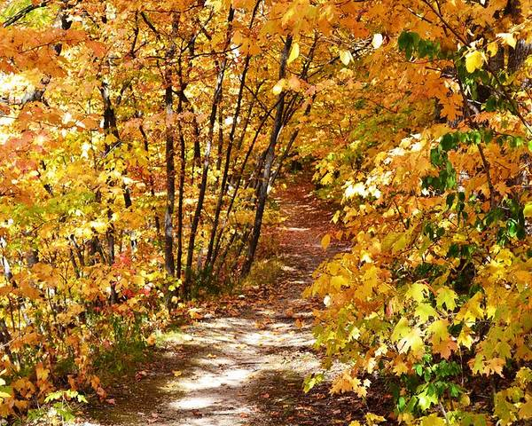 Fall Poster featuring the photograph Golden Trail by Kim Hymes
