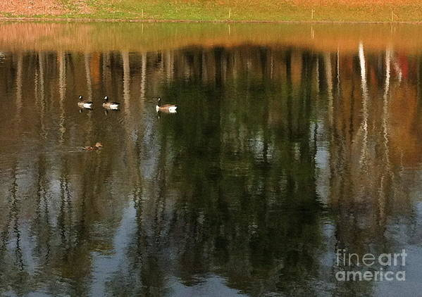 Poster featuring the photograph Goose Goose Duck Goose by Trish Hale