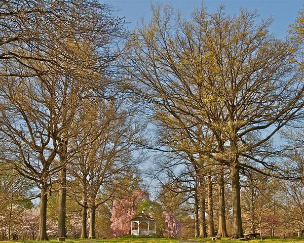 Scenic Trees Gazebo Cherry Blossoms Philadelphia Japanese Gardens Fairmount Poster featuring the photograph Gorgeous by Alice Gipson