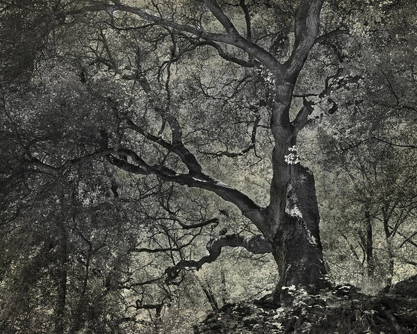 Trees Poster featuring the photograph Grabbing by Laurie Search