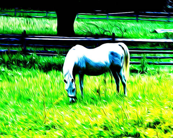Grazing Horse Poster featuring the photograph Grazing Horse by Bill Cannon