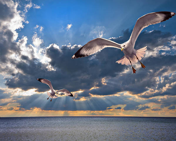 Gull Poster featuring the photograph Greek Gulls With Sunbeams by Meirion Matthias