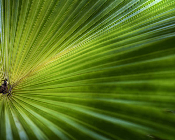 Annual Poster featuring the photograph Green Palm by Al Hurley