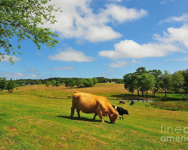 Farms Poster featuring the photograph Green Pasture by Catherine Reusch Daley