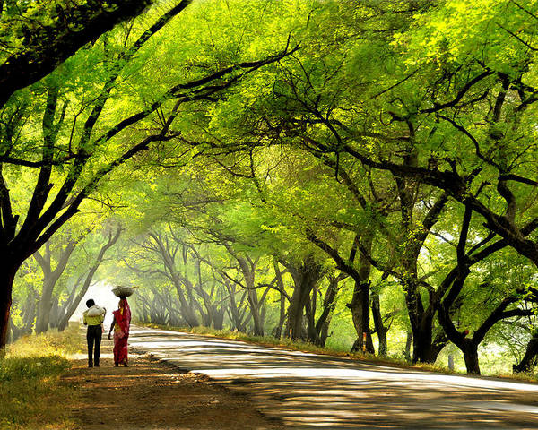 Landscape Poster featuring the photograph Green Tunnel by C R Shelare