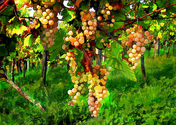Wine Poster featuring the painting Hanging Grapes On The Vine by Elaine Plesser