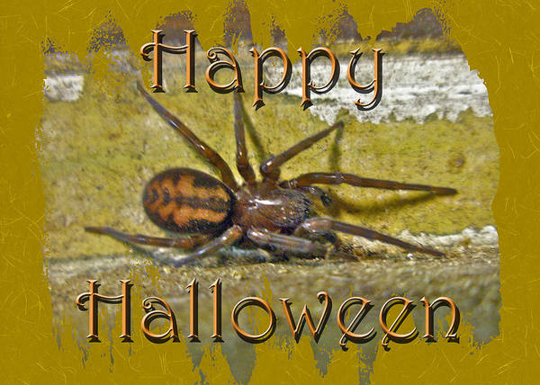 Halloween Poster featuring the photograph Happy Halloween Spider Greeting Card by Mother Nature