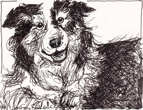 Boarder Collie Poster featuring the drawing Happy The Boarder Collie by Michele Hollister - for Nancy Asbell