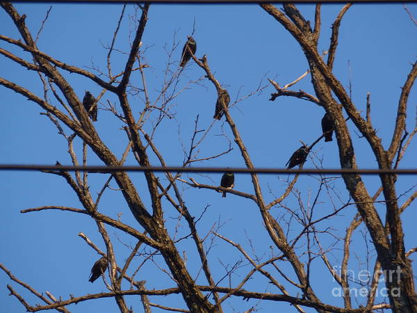 Birds Poster featuring the photograph Having A Meeting by Charmaine Lundy