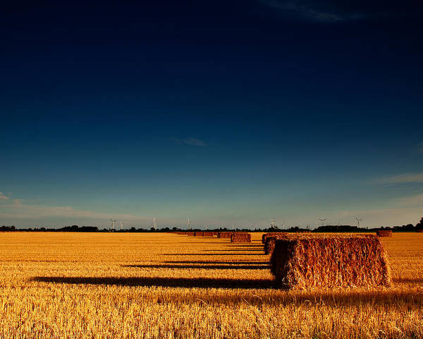 Hay Poster featuring the photograph Hay Bales by Cale Best
