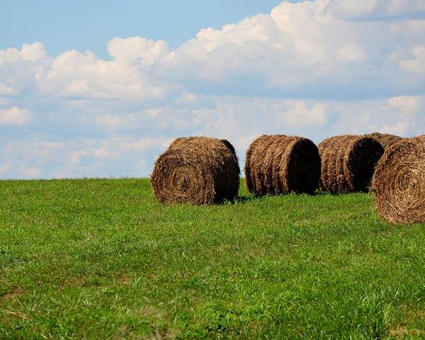Hay Poster featuring the photograph Hay Hay Hay by Mark Bowmer