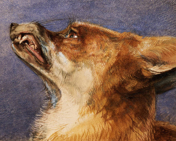 Fox Poster featuring the pastel Head Of A Fox by John Frederick Lewis