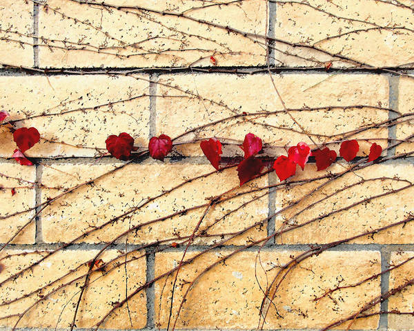 Vine Poster featuring the digital art Hearts On The Wall by Timothy Bulone