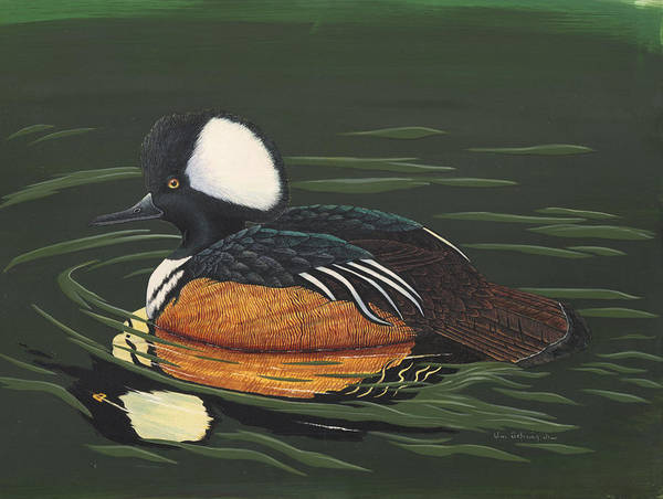 Duck Poster featuring the painting Hooded Merganser by Bill Gehring