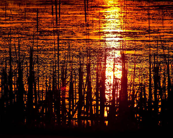 Horicon Poster featuring the photograph Horicon Marsh Sunset Wisconsin by Steve Gadomski