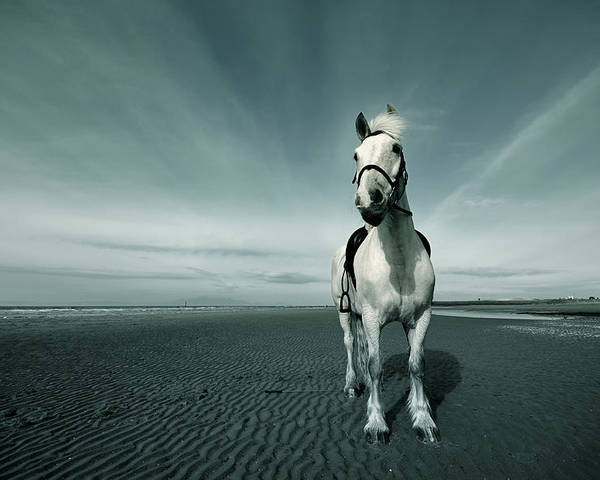 Horizontal Poster featuring the photograph Horse At Irvine Beach by Mikeimages