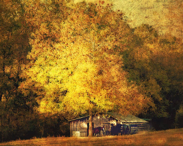 Barn Poster featuring the photograph Horse Barn In The Shade by Kathy Jennings