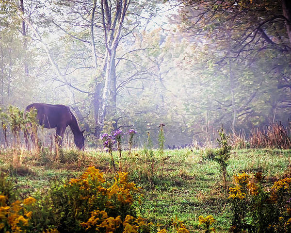 Ajnphotography Poster featuring the photograph Horse In The Mist by Alan Norsworthy