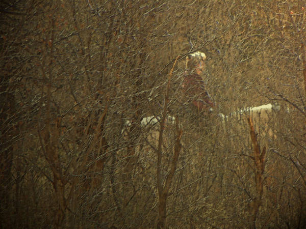 Abstract Poster featuring the photograph Horseback In The Garden by Lenore Senior
