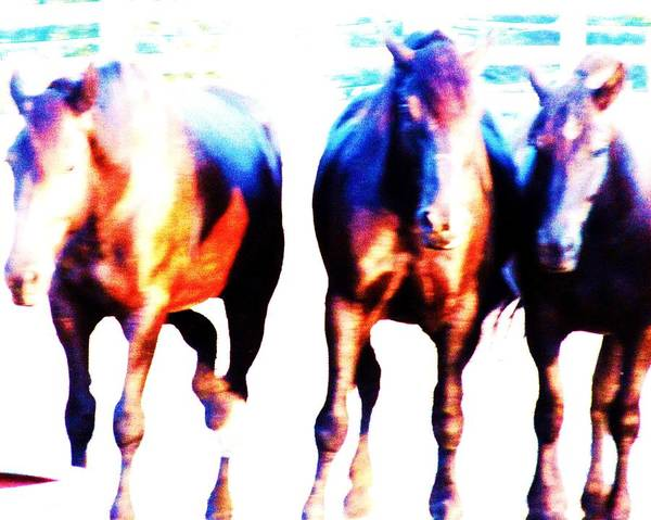 Abstract Colorful Horses Poster featuring the photograph Horses-30 by Todd Sherlock