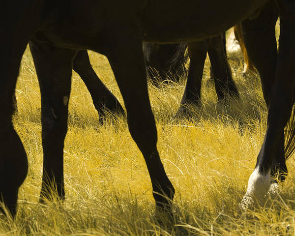 Horizontal Poster featuring the photograph Horses Grazing by Donovan Reese