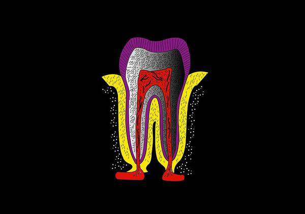 Mineral Poster featuring the photograph Human Tooth Anatomy, Artwork by Francis Leroy, Biocosmos