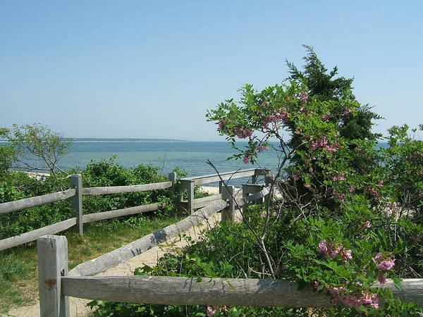 Path Poster featuring the photograph Hyannis Summer by Patricia Williams