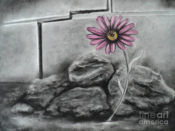 Flower Poster featuring the drawing I Dance Alone by Carla Carson