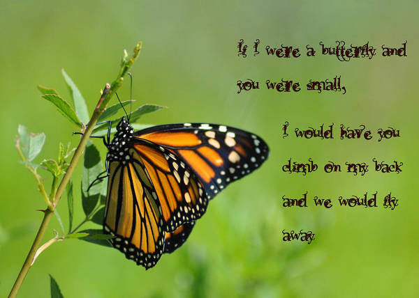 If I Were A Butterfly Poster featuring the photograph If I Were A Butterfly by Bill Cannon