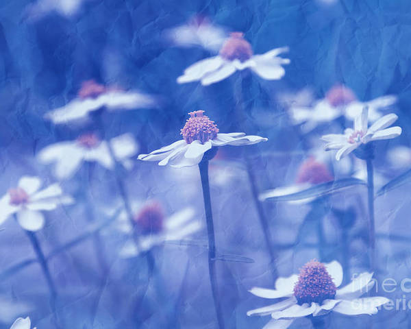 Daisies Poster featuring the photograph Imagine 06ht01 by Variance Collections