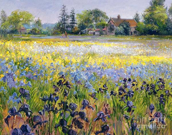 Landscape; Iris; Flower; Flowers; Irises; Tree; Trees; Field; House Poster featuring the painting Irises And Two Fir Trees by Timothy Easton