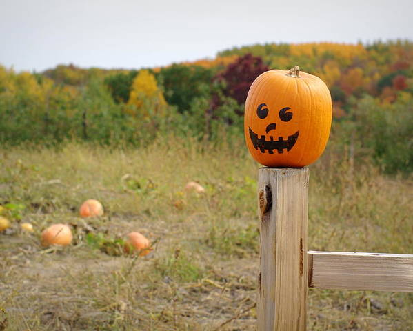 Pumpkins Poster featuring the photograph Jack O'lantern by Linda Mishler