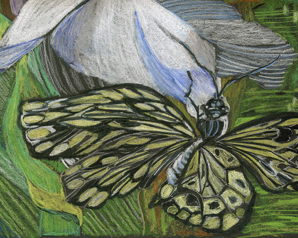 Butterfly Poster featuring the drawing Just Hanging Out by Mindy Newman
