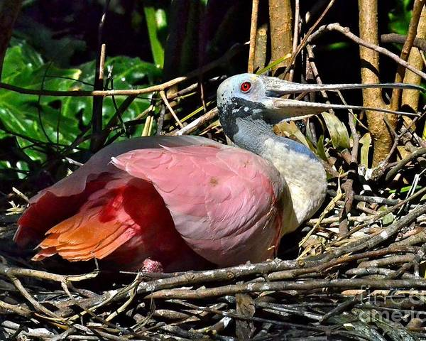 Spoonbill Poster featuring the photograph Keeping The Babies Warm by Carol Bradley