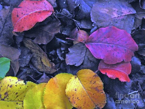 Fall Poster featuring the photograph Kiss Of Fall by Joe Jake Pratt