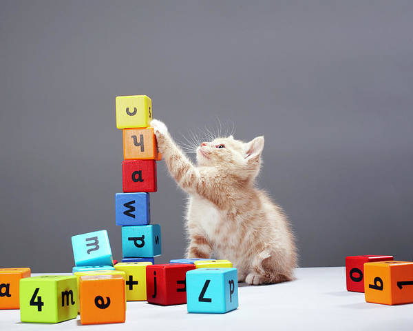 Horizontal Poster featuring the photograph Kitten Playing With Building Blocks by Martin Poole