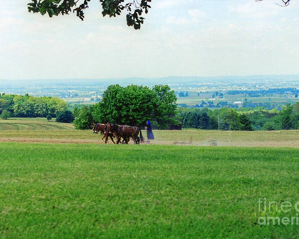 Amish Poster featuring the photograph Lady Plowing In Field by Wayne Nielsen