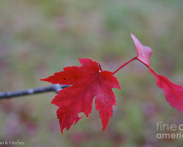 Outdoors Poster featuring the photograph Last Leaves by Susan Herber