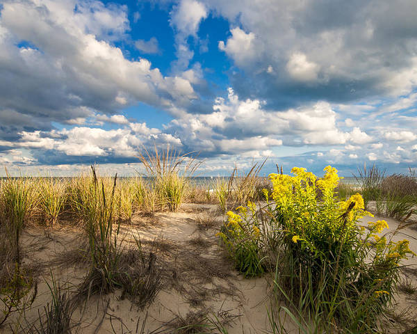 Beach Poster featuring the photograph Late Summer Dunes Ocean City by Jim Moore