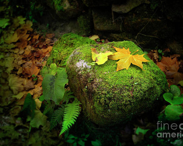 Autumn Poster featuring the photograph Leafs On Rock by Carlos Caetano