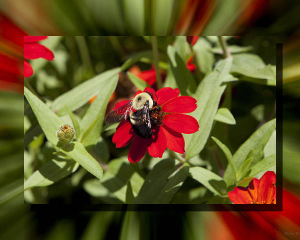 Flower Poster featuring the photograph Let It Bee by Charles Warren
