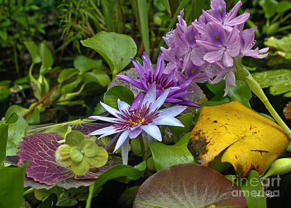 Exotic Cluster Of Water Lilies Poster featuring the photograph Lilies No. 39 by Anne Klar