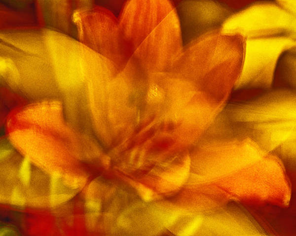 Lily Poster featuring the photograph Lily Abstract by Charles Garrett