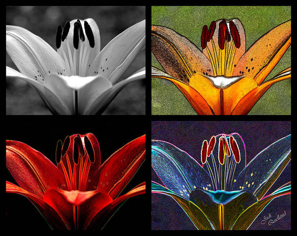Flowers Poster featuring the photograph Lily Quartet by Judi Quelland