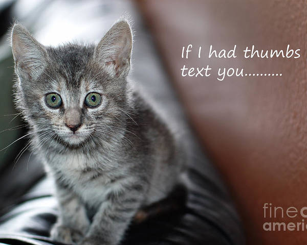 Kitten Poster featuring the photograph Little Kitten Greeting Card by Micah May