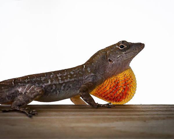 3903 Poster featuring the photograph Lizard Portrait by Marx Broszio