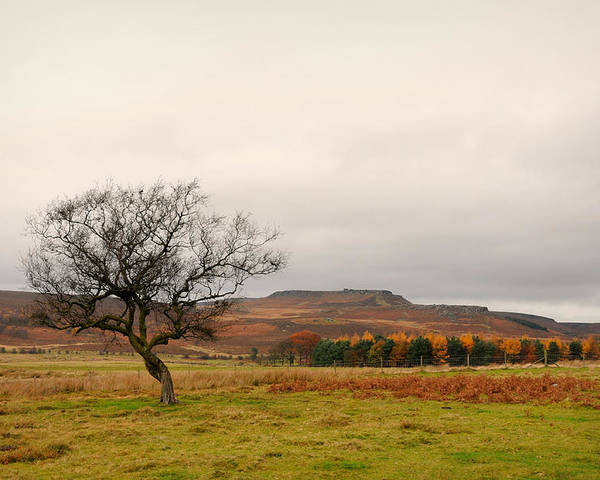 Derbyshire Poster featuring the photograph Lone Tree And Higger Tor by Siobhan Brennan-Raymond