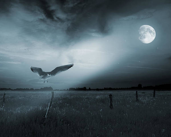 Beam Poster featuring the photograph Lonely Bird In Moonlight by Jaroslaw Grudzinski
