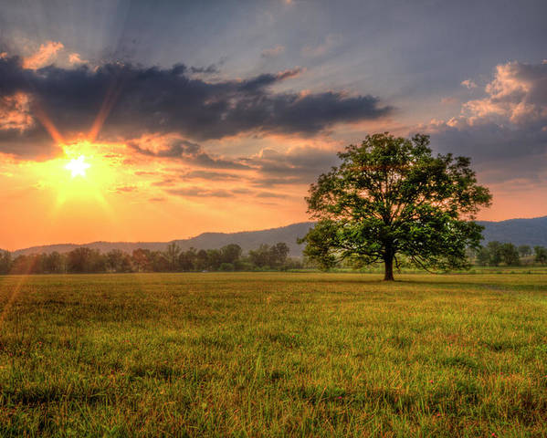 Horizontal Poster featuring the photograph Lonely Tree In Field by Malcolm MacGregor