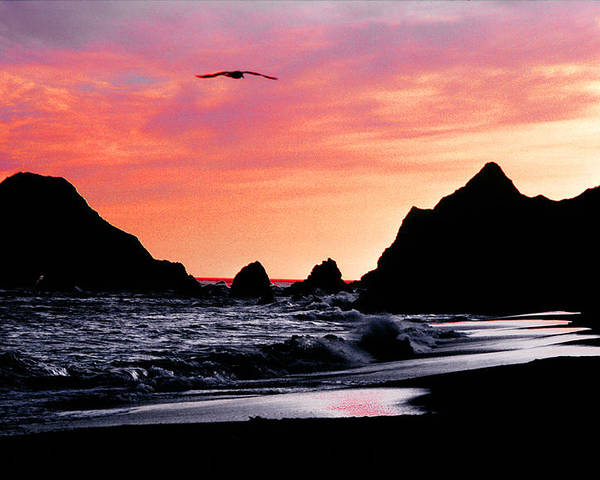 Pacific Ocean Poster featuring the photograph Lonesome Gull by Mike Flynn
